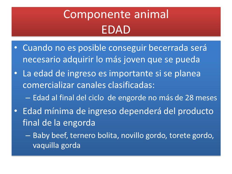 Componente animal EDAD Cuando no es posible conseguir becerrada será necesario adquirir lo más joven que se pueda La edad de ingreso es importante si