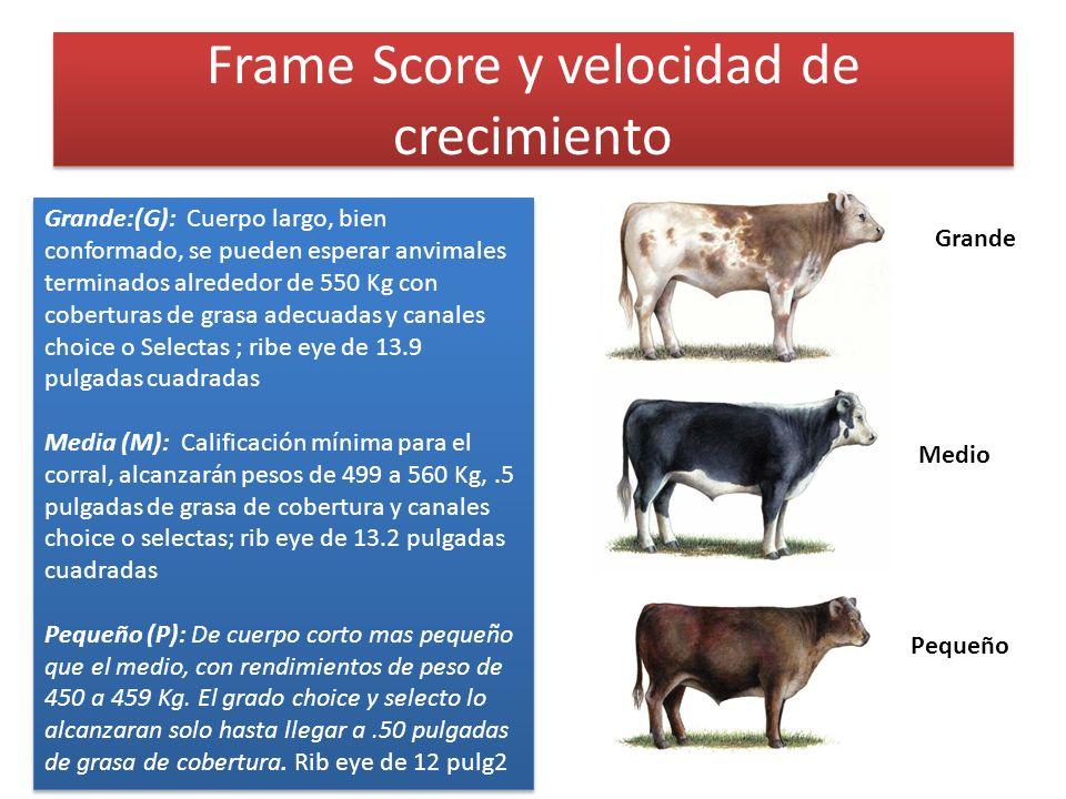 Frame Score y velocidad de crecimiento Medio Grande Pequeño Grande:(G): Cuerpo largo, bien conformado, se pueden esperar anvimales terminados alrededo
