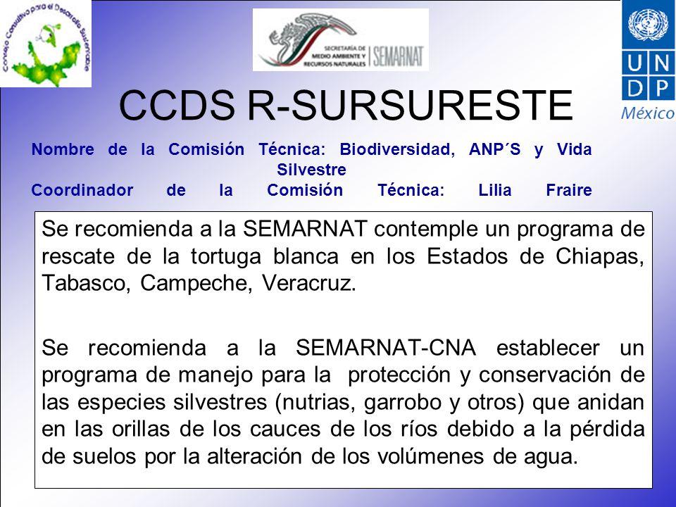 CCDS R-SURSURESTE Se recomienda a la SEMARNAT contemple un programa de rescate de la tortuga blanca en los Estados de Chiapas, Tabasco, Campeche, Veracruz.