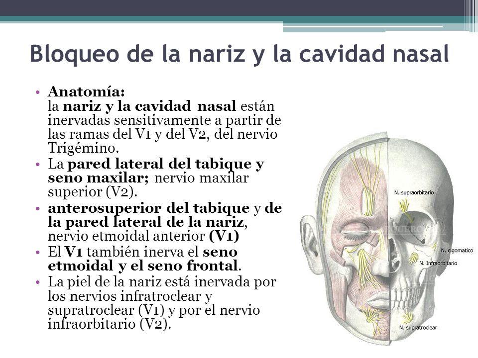 Bloqueo de la nariz y la cavidad nasal Anatomía: la nariz y la cavidad nasal están inervadas sensitivamente a partir de las ramas del V1 y del V2, del nervio Trigémino.