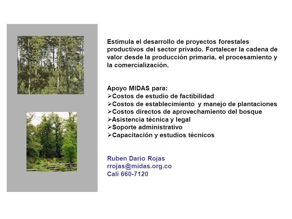 Estimula el desarrollo de proyectos forestales productivos del sector privado.