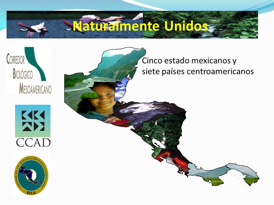 Estrategias Unificar las políticas nacionales hacia políticas regionales en desarrollo sostenible.