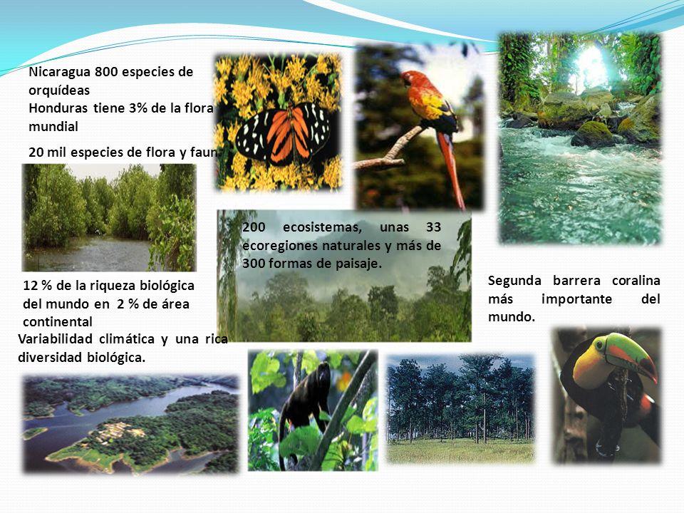 Aspecto institucional Comisión Centroamericana de Ambiente y Desarrollo (CCAD) Estrategia Regional para la Conservación y el Uso de la Biodiversidad en Mesoamérica.