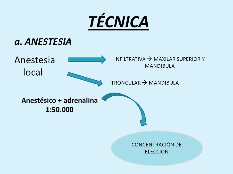 a. ANESTESIA Anestesia local INFILTRATIVA MAXILAR SUPERIOR Y MANDIBULA TRONCULAR MANDIBULA Anestésico + adrenalina 1:50.000 CONCENTRACIÓN DE ELECCIÓN