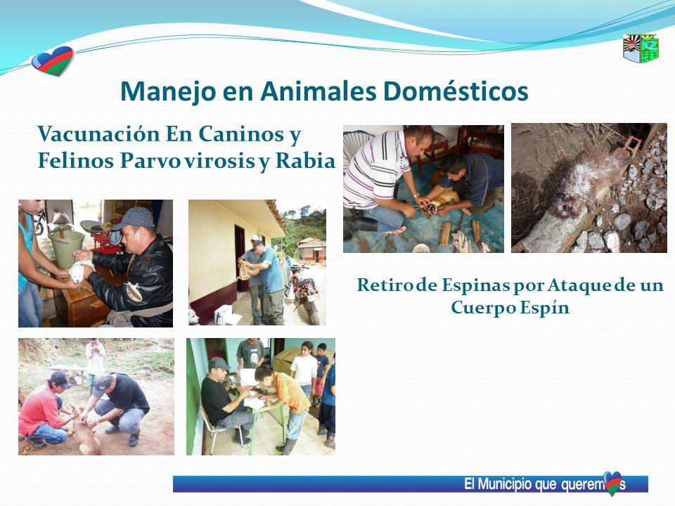 Manejo en Animales Domésticos Vacunación En Caninos y Felinos Parvo virosis y Rabia Retiro de Espinas por Ataque de un Cuerpo Espín