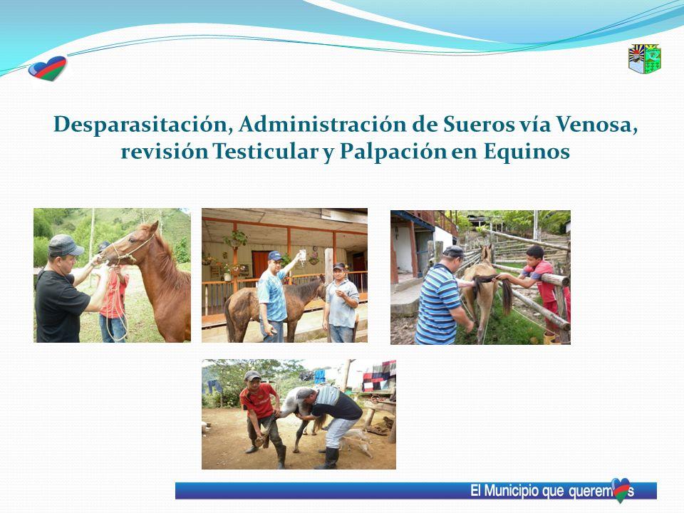 Desparasitación, Administración de Sueros vía Venosa, revisión Testicular y Palpación en Equinos
