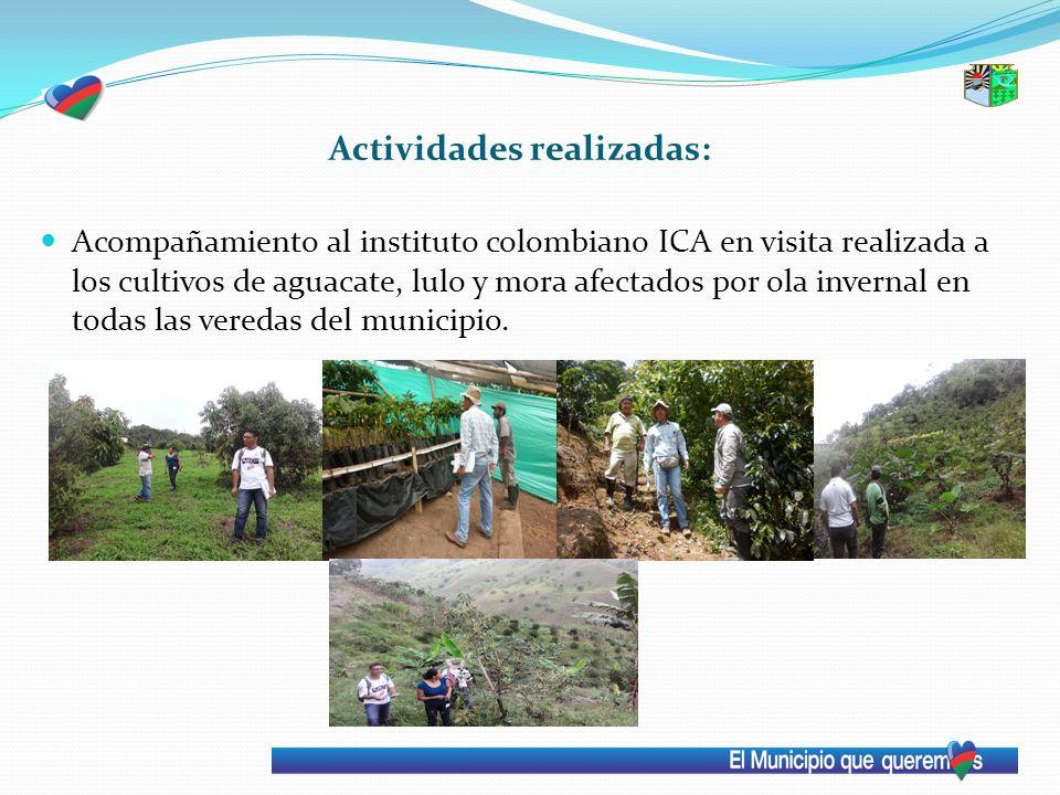 Actividades realizadas: Acompañamiento al instituto colombiano ICA en visita realizada a los cultivos de aguacate, lulo y mora afectados por ola inver