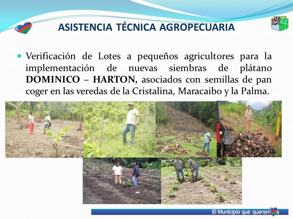 ASISTENCIA TÉCNICA AGROPECUARIA Verificación de Lotes a pequeños agricultores para la implementación de nuevas siembras de plátano DOMINICO – HARTON,