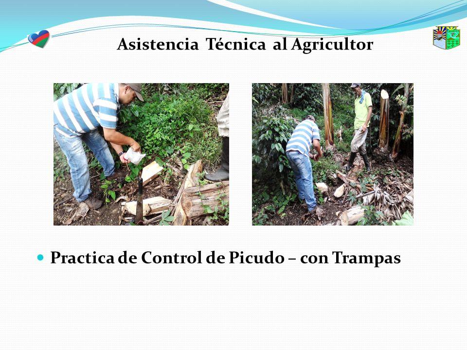 Asistencia Técnica al Agricultor Practica de Control de Picudo – con Trampas
