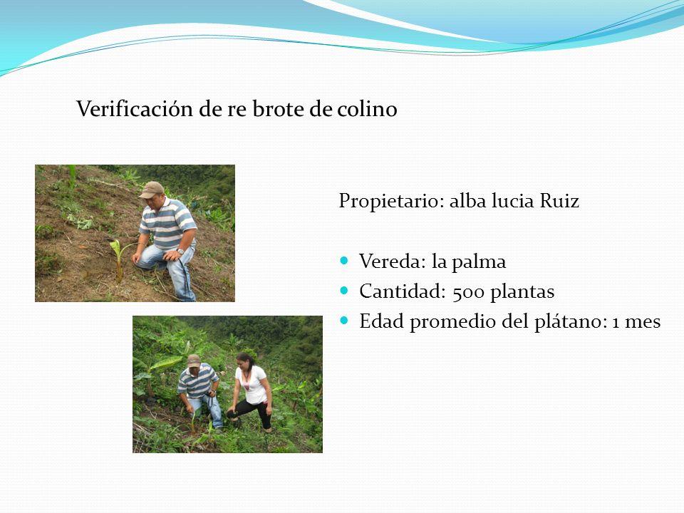 Verificación de re brote de colino Propietario: alba lucia Ruiz Vereda: la palma Cantidad: 500 plantas Edad promedio del plátano: 1 mes