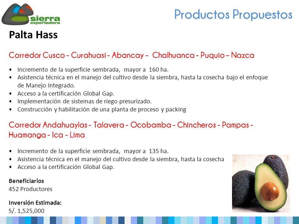 Productos Propuestos Palta Hass Corredor Cusco - Curahuasi - Abancay - Chalhuanca - Puquio – Nazca Incremento de la superficie sembrada, mayor a 160 ha.