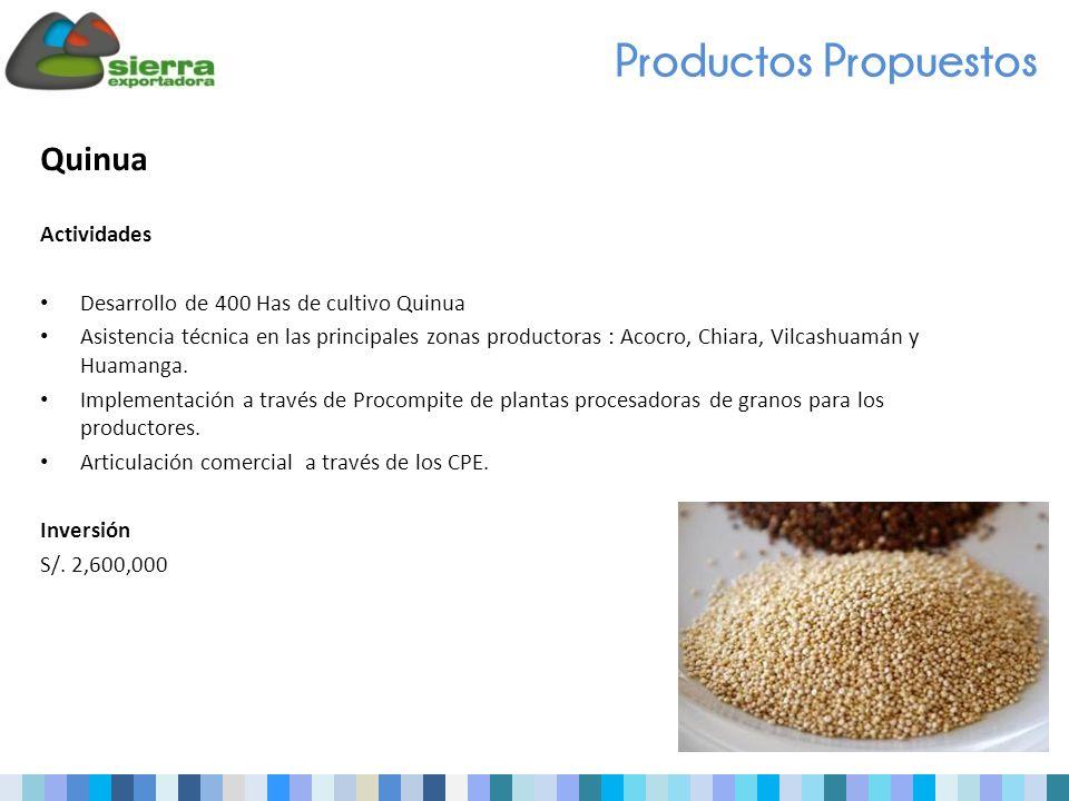 Quinua Actividades Desarrollo de 400 Has de cultivo Quinua Asistencia técnica en las principales zonas productoras : Acocro, Chiara, Vilcashuamán y Huamanga.