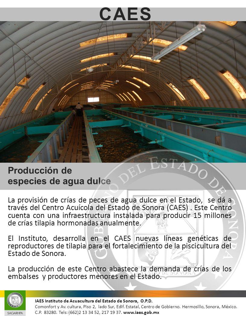 Producción de especies de agua dulce CAES IAES Instituto de Acuacultura del Estado de Sonora, O.P.D. Comonfort y Av. cultura, Piso 2, lado Sur, Edif.