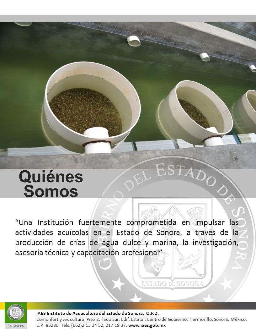 Quiénes somos Quiénes Somos Una Institución fuertemente comprometida en impulsar las actividades acuícolas en el Estado de Sonora, a través de la prod