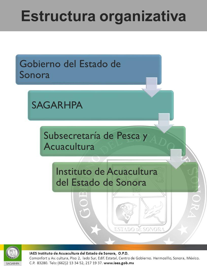 Gobierno del Estado de Sonora SAGARHPA Subsecretaría de Pesca y Acuacultura Instituto de Acuacultura del Estado de Sonora Estructura organizativa IAES