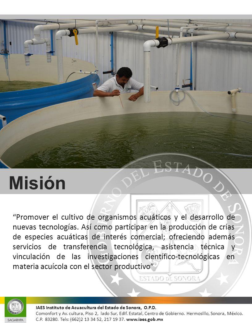 Visión Ser una Entidad comprometida en fomentar e impulsar al sector social y privado de Sonora para su desarrollo y crecimiento económico a través de la Acuacultura; con la finalidad de mantener a la entidad a la vanguardia en esta actividad productiva fundamental.