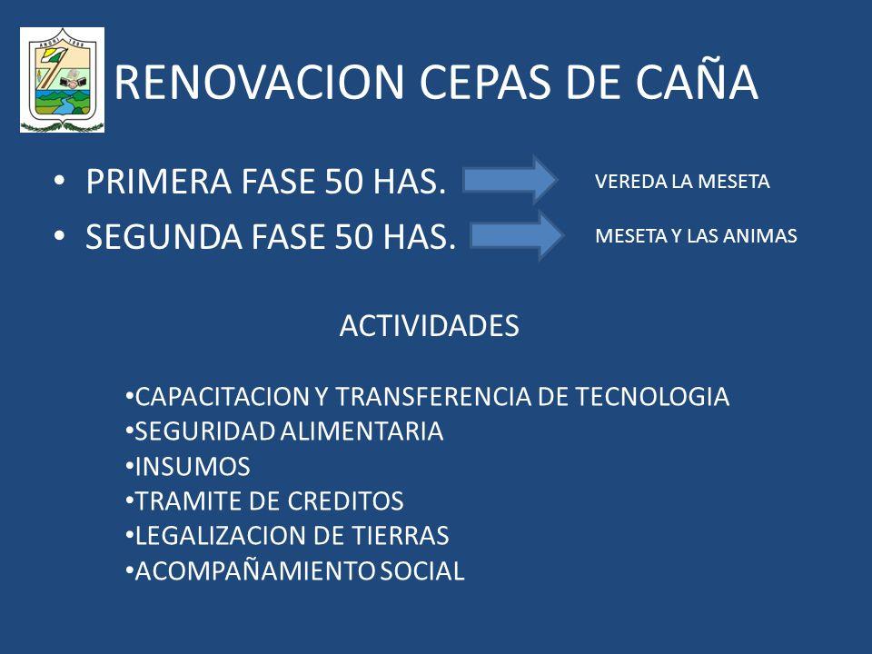 RENOVACION CEPAS DE CAÑA PRIMERA FASE 50 HAS.SEGUNDA FASE 50 HAS.