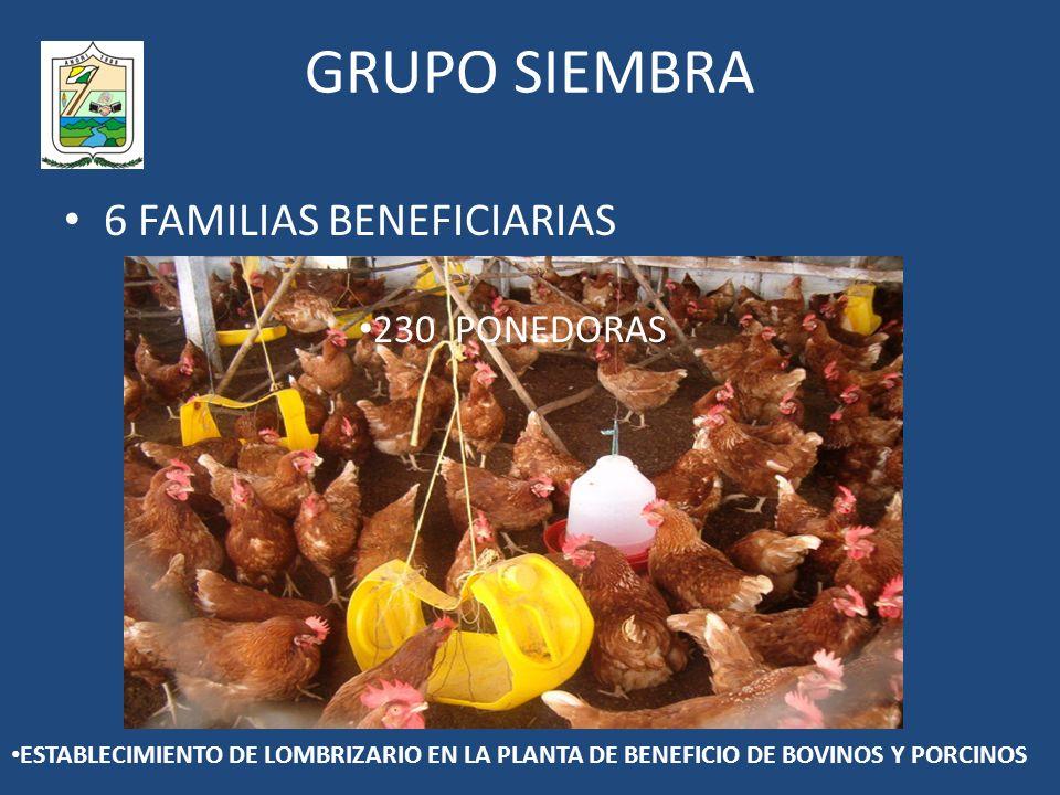 GRUPO SIEMBRA 6 FAMILIAS BENEFICIARIAS 230 PONEDORAS ESTABLECIMIENTO DE LOMBRIZARIO EN LA PLANTA DE BENEFICIO DE BOVINOS Y PORCINOS
