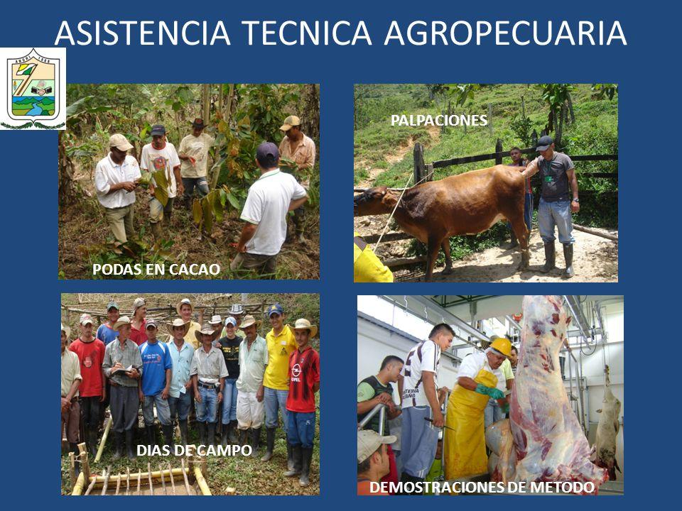 ASISTENCIA TECNICA AGROPECUARIA PODAS EN CACAO PALPACIONES DIAS DE CAMPO DEMOSTRACIONES DE METODO