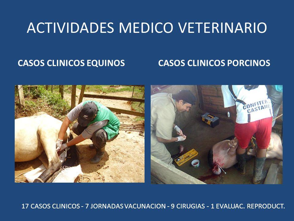 ACTIVIDADES MEDICO VETERINARIO CASOS CLINICOS EQUINOSCASOS CLINICOS PORCINOS 17 CASOS CLINICOS - 7 JORNADAS VACUNACION - 9 CIRUGIAS - 1 EVALUAC.