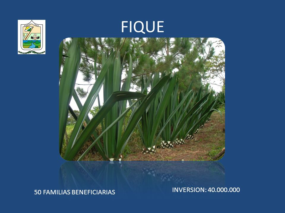 FIQUE 50 FAMILIAS BENEFICIARIAS INVERSION: 40.000.000