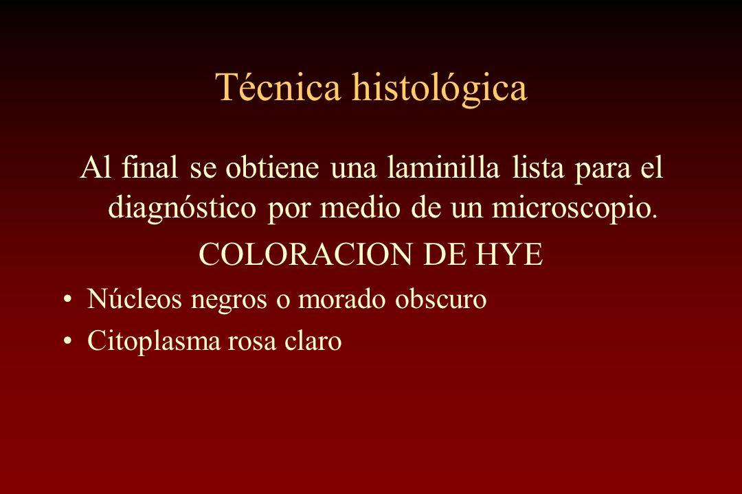 Técnica histológica Al final se obtiene una laminilla lista para el diagnóstico por medio de un microscopio. COLORACION DE HYE Núcleos negros o morado