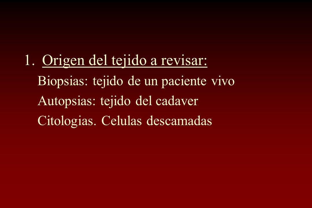 1.Origen del tejido a revisar: Biopsias: tejido de un paciente vivo Autopsias: tejido del cadaver Citologias. Celulas descamadas