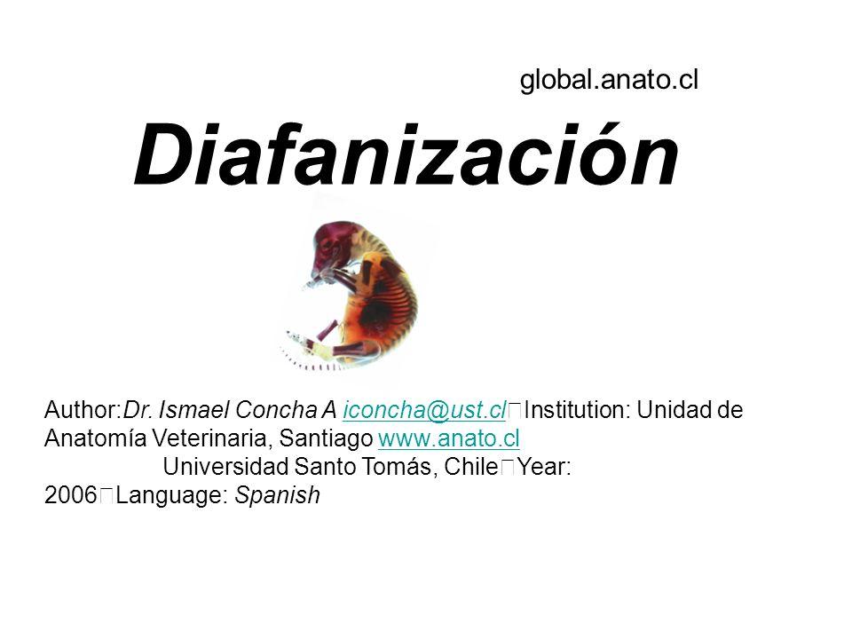 Diafanización Author:Dr. Ismael Concha A iconcha@ust.cl Institution: Unidad de Anatomía Veterinaria, Santiago www.anato.cliconcha@ust.clwww.anato.cl U