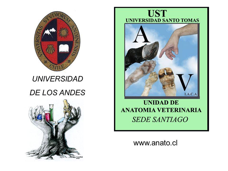 UNIVERSIDAD DE LOS ANDES www.anato.cl