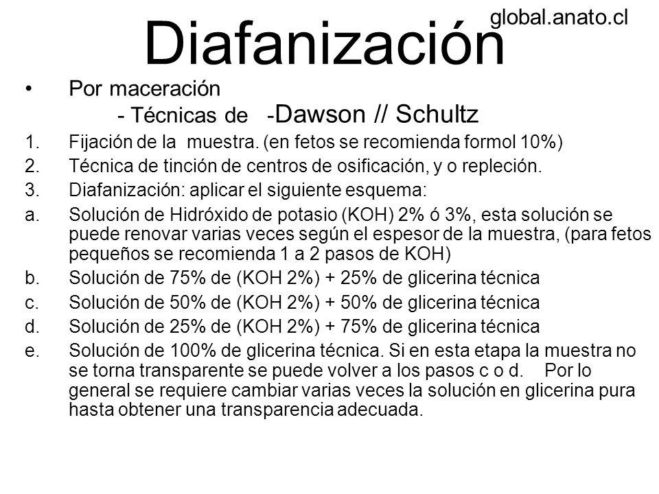 Diafanización Por maceración - Técnicas de - Dawson // Schultz 1.Fijación de la muestra. (en fetos se recomienda formol 10%) 2.Técnica de tinción de c