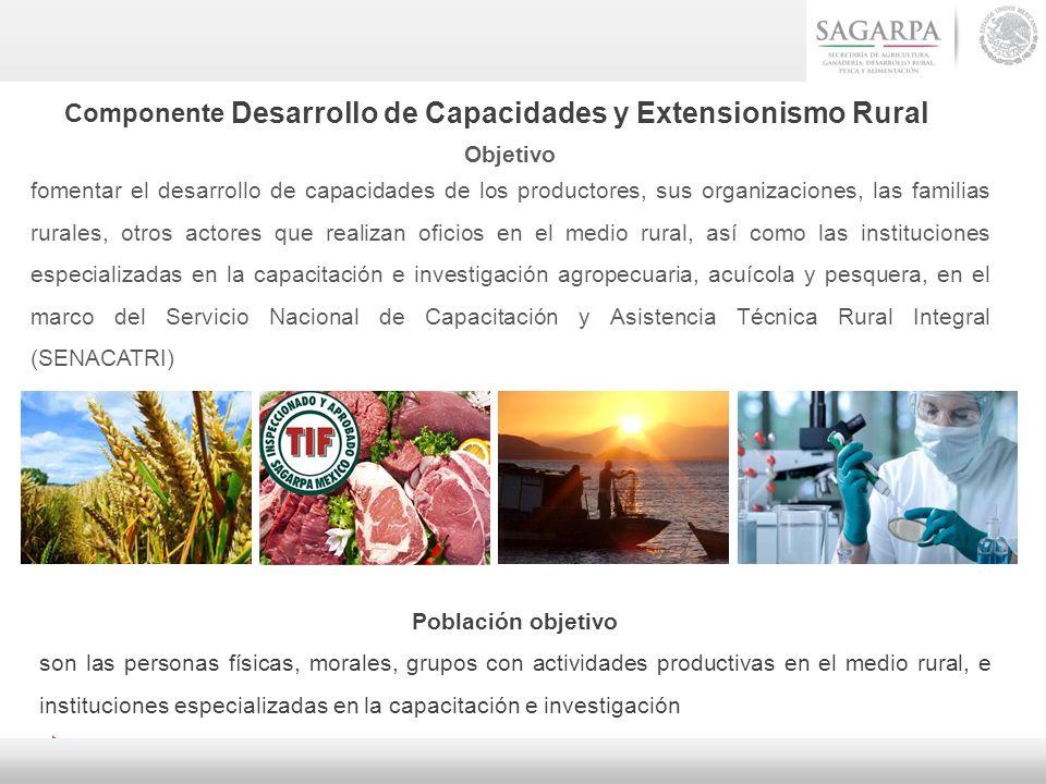 Componente Desarrollo de Capacidades y Extensionismo Rural Objetivo fomentar el desarrollo de capacidades de los productores, sus organizaciones, las
