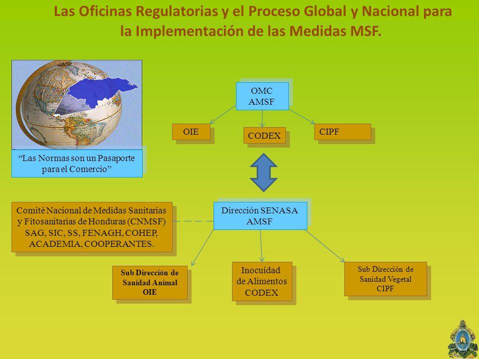OMC AMSF OMC AMSF CODEX OIE CIPF Dirección SENASA AMSF Sub Dirección de Sanidad Animal OIE Inocuidad de Alimentos CODEX Inocuidad de Alimentos CODEX S