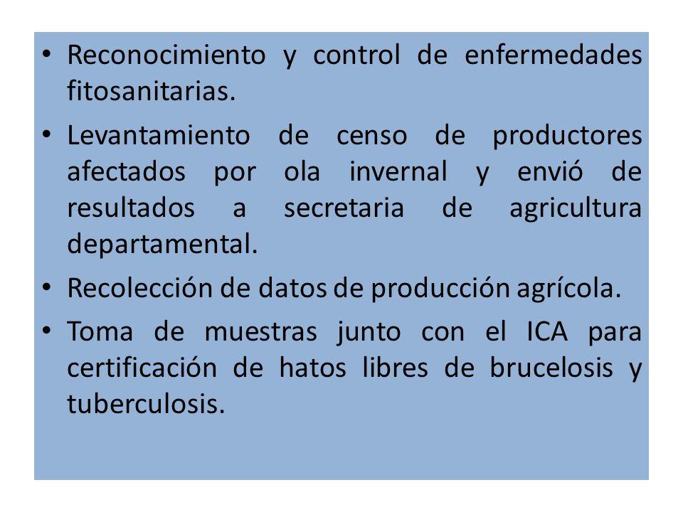 ACTIVIDADES REALIZADAS DENTRO DEL MARCO DE ASISTENCIA TECNICA Concientización a productores frijoleros sobre uso racional de agroquímicos (taller). Se