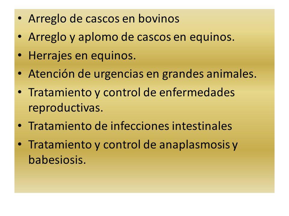 Atención de pequeña cirugías a ganado bovino. Castraciones Atención de partos distócicos. Toma de ecografías a hembras bovinas. Control de parásitos i