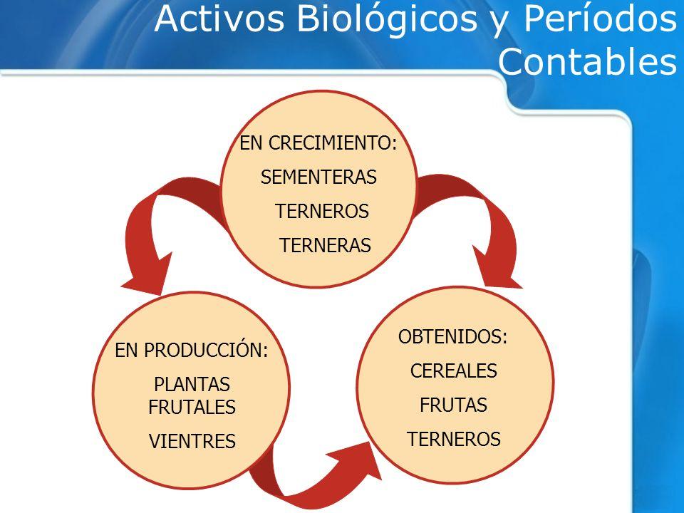 Activos Biológicos y Períodos Contables EN CRECIMIENTO: SEMENTERAS TERNEROS TERNERAS EN PRODUCCIÓN: PLANTAS FRUTALES VIENTRES OBTENIDOS: CEREALES FRUTAS TERNEROS