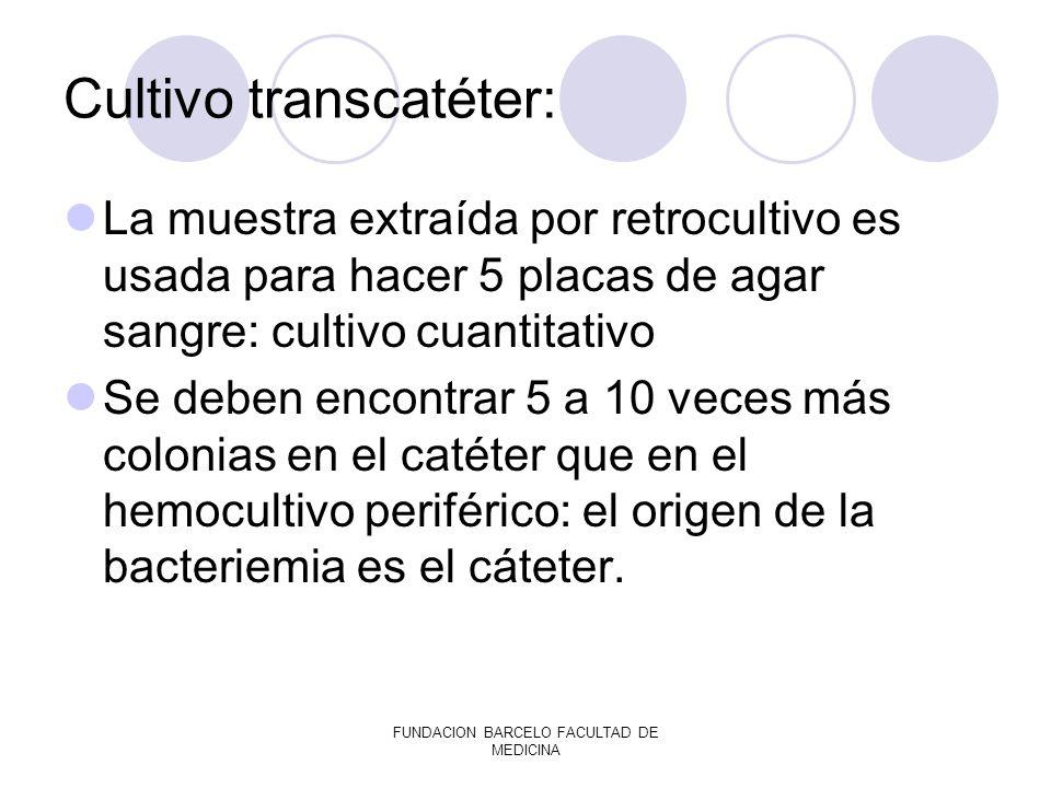 FUNDACION BARCELO FACULTAD DE MEDICINA Cultivo transcatéter: La muestra extraída por retrocultivo es usada para hacer 5 placas de agar sangre: cultivo