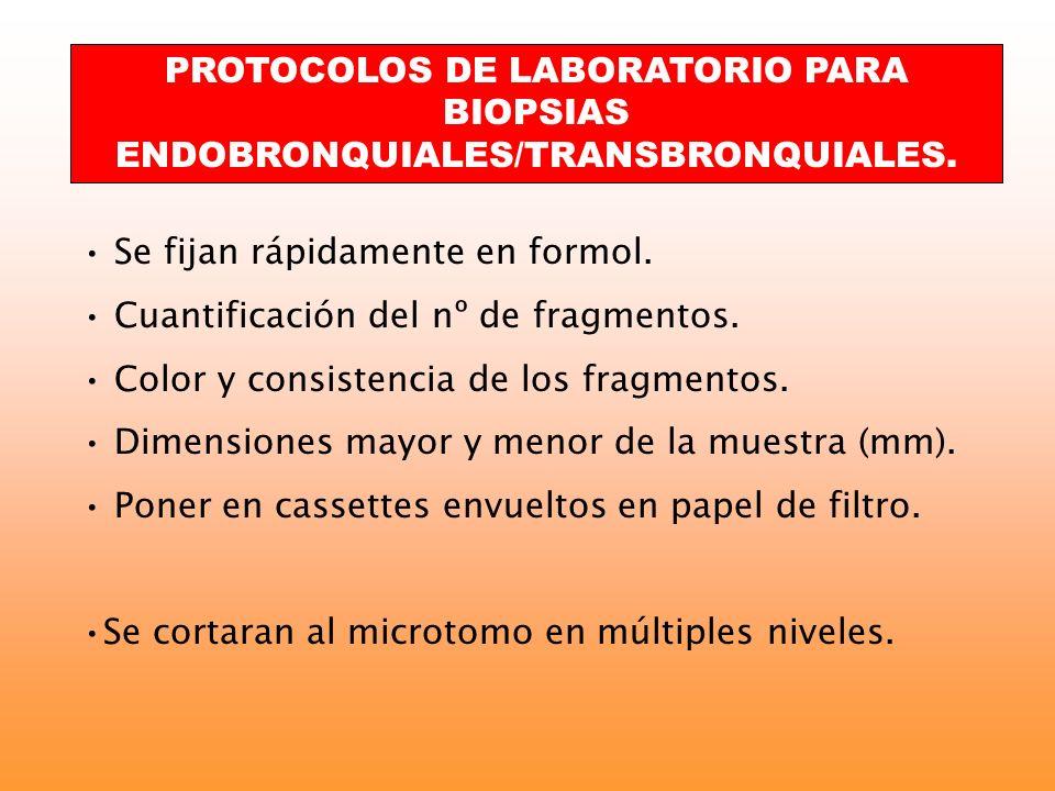 PROTOCOLOS DE LABORATORIO PARA BIOPSIAS ENDOBRONQUIALES/TRANSBRONQUIALES. Se fijan rápidamente en formol. Cuantificación del nº de fragmentos. Color y