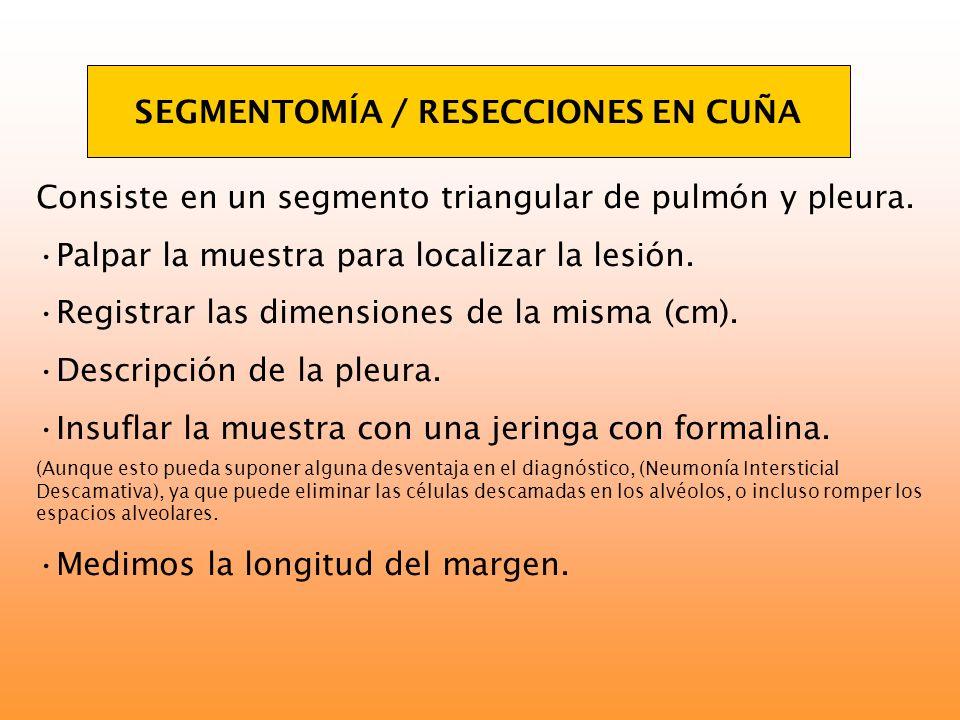 SEGMENTOMÍA / RESECCIONES EN CUÑA Consiste en un segmento triangular de pulmón y pleura. Palpar la muestra para localizar la lesión. Registrar las dim