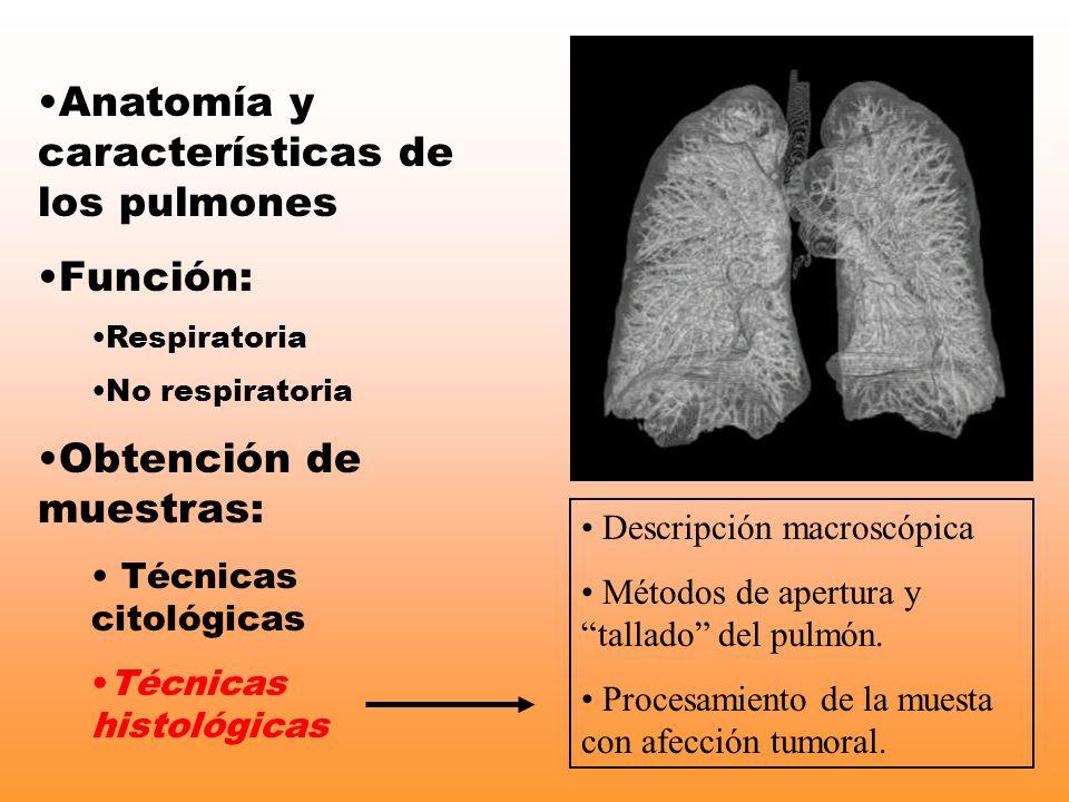 Anatomía y características de los pulmones Función: Respiratoria No respiratoria Obtención de muestras: Técnicas citológicas Técnicas histológicas Des