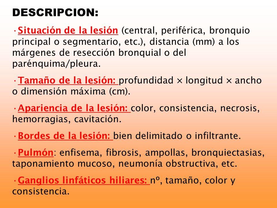 DESCRIPCION: Situación de la lesión (central, periférica, bronquio principal o segmentario, etc.), distancia (mm) a los márgenes de resección bronquia