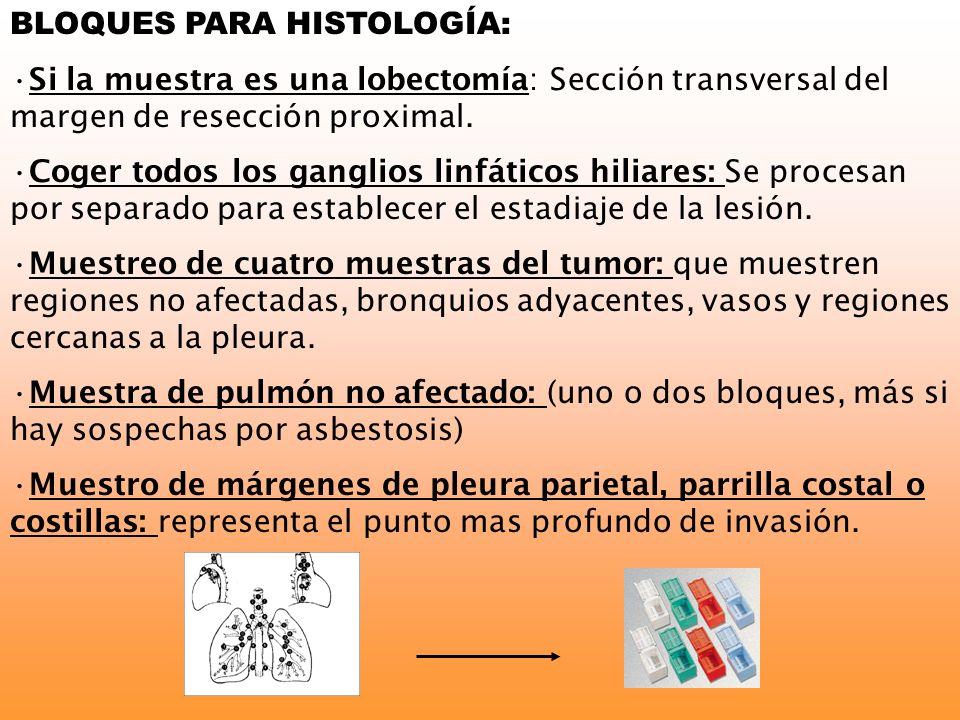 BLOQUES PARA HISTOLOGÍA: Si la muestra es una lobectomía: Sección transversal del margen de resección proximal. Coger todos los ganglios linfáticos hi