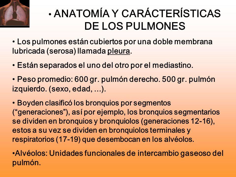 ANATOMÍA Y CARÁCTERÍSTICAS DE LOS PULMONES Los pulmones están cubiertos por una doble membrana lubricada (serosa) llamada pleura. Están separados el u