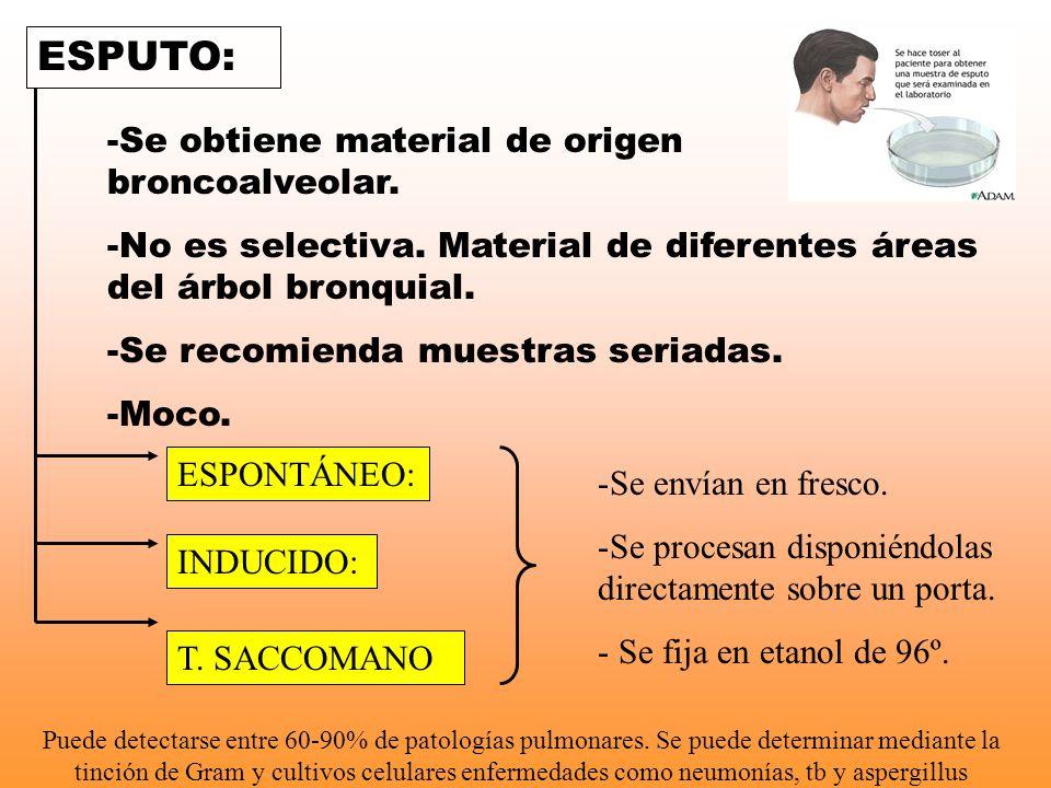 ESPUTO: -Se obtiene material de origen broncoalveolar. -No es selectiva. Material de diferentes áreas del árbol bronquial. -Se recomienda muestras ser