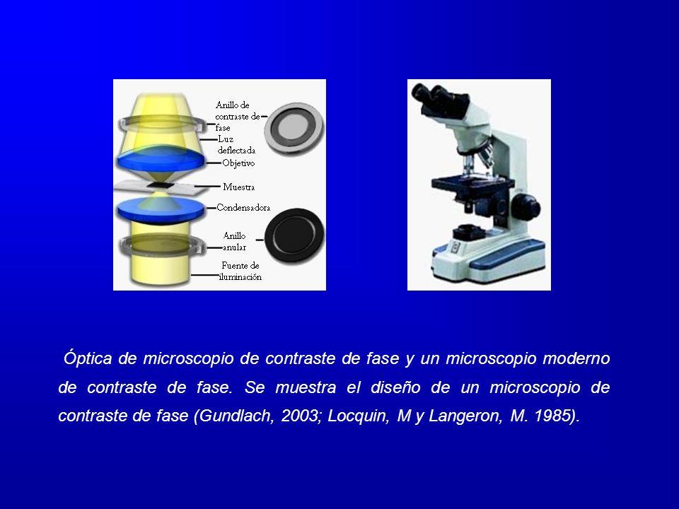 Óptica de microscopio de contraste de fase y un microscopio moderno de contraste de fase. Se muestra el diseño de un microscopio de contraste de fase