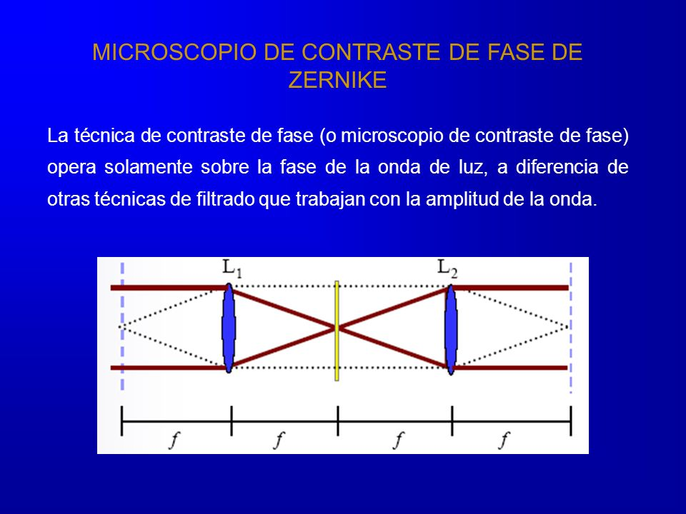 MICROSCOPIO DE CONTRASTE DE FASE DE ZERNIKE La técnica de contraste de fase (o microscopio de contraste de fase) opera solamente sobre la fase de la onda de luz, a diferencia de otras técnicas de filtrado que trabajan con la amplitud de la onda.