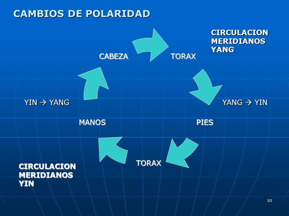 10 CIRCULACION MERIDIANOS YIN CIRCULACION MERIDIANOS YANG YIN YANG YANG YIN CAMBIOS DE POLARIDAD