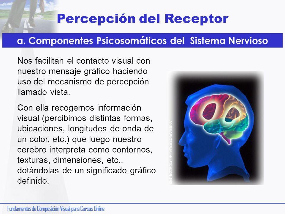 Percepción del Receptor a. Componentes Psicosomáticos del Sistema Nervioso Nos facilitan el contacto visual con nuestro mensaje gráfico haciendo uso d