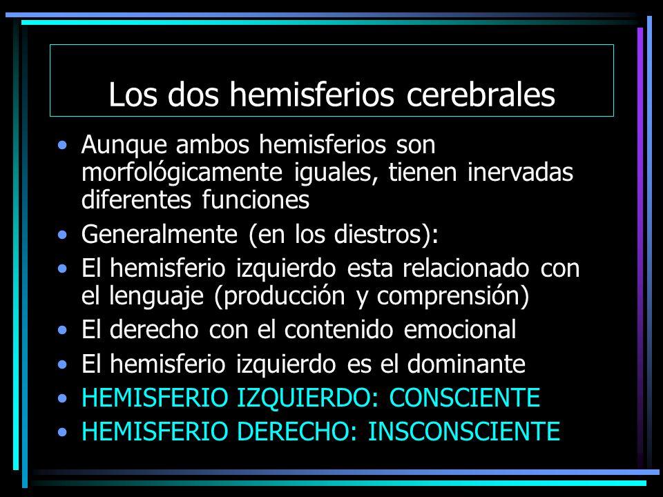 Los dos hemisferios cerebrales Aunque ambos hemisferios son morfológicamente iguales, tienen inervadas diferentes funciones Generalmente (en los diestros): El hemisferio izquierdo esta relacionado con el lenguaje (producción y comprensión) El derecho con el contenido emocional El hemisferio izquierdo es el dominante HEMISFERIO IZQUIERDO: CONSCIENTE HEMISFERIO DERECHO: INSCONSCIENTE
