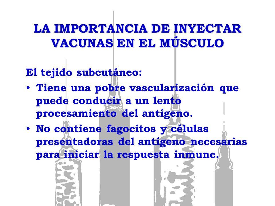 LA IMPORTANCIA DE INYECTAR VACUNAS EN EL MÚSCULO El tejido subcutáneo: Tiene una pobre vascularización que puede conducir a un lento procesamiento del