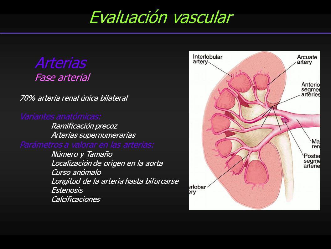 Evaluación vascular Arterias Fase arterial 70% arteria renal única bilateral Variantes anatómicas: Ramificación precoz Arterias supernumerarias Paráme
